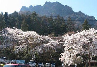 妙義山麓の桜