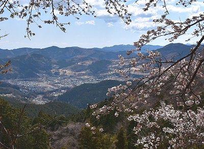春に咲いた冬桜と眼下の景色