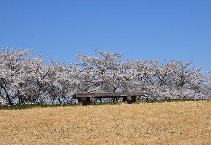 妙義パノラマパークのベンチと桜