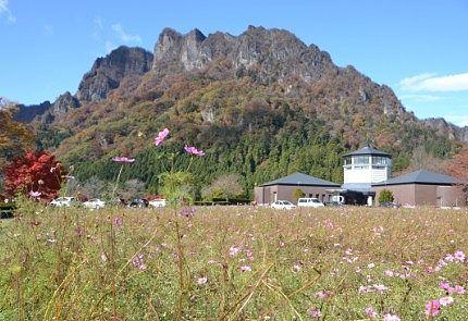 妙義パノラマパークのコスモス畑と妙義山