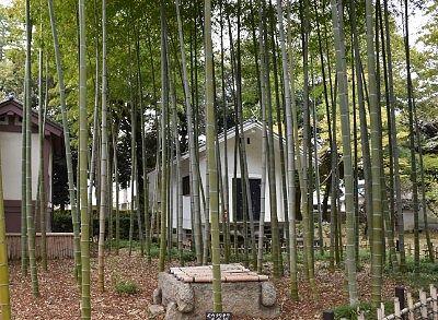 竹林と収蔵庫