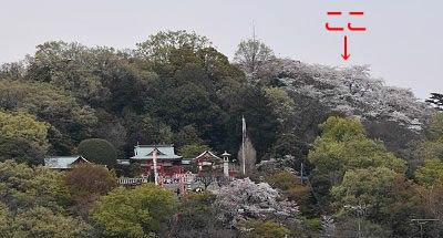 市街地から見た織姫公園の桜の場所