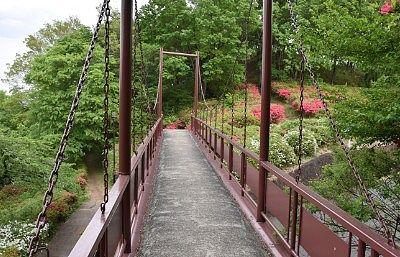 つつじも楽しめる吊り橋