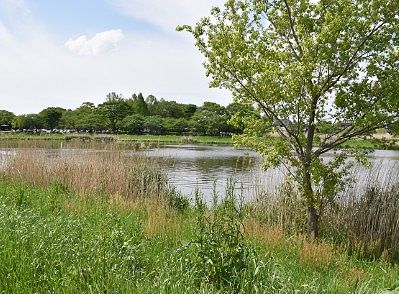 のどかな城沼の様子