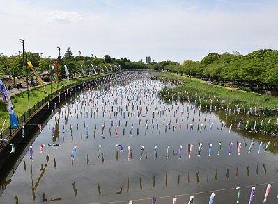 鶴生田川メイン会場の鯉のぼり