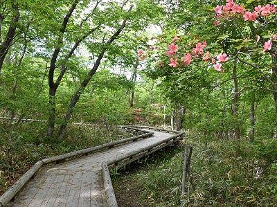 つつじ吊橋への遊歩道