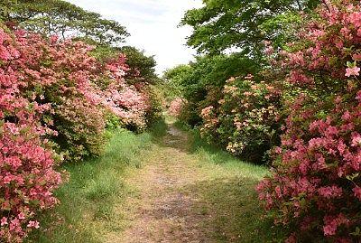 左右つつじの花の遊歩道の様子