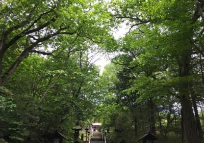 木々に覆われてた参道