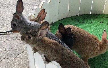 ウサギにエサをあげてる様子