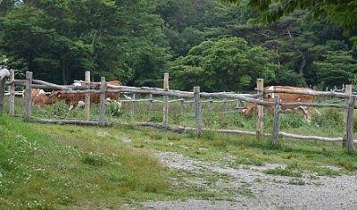 牛の放牧場