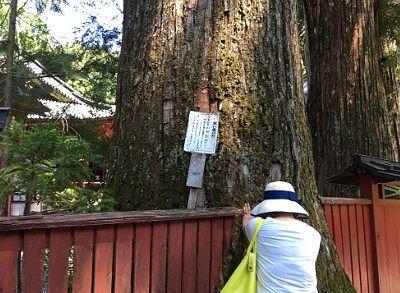 良い縁の杉