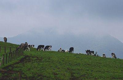 放牧場の様子1