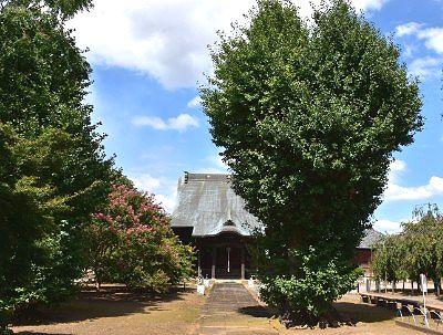 薬師堂と大樹