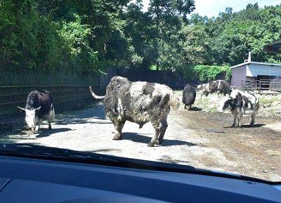 道をふさぐ動物たち