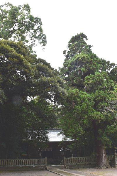 御神木の杉の木と社殿