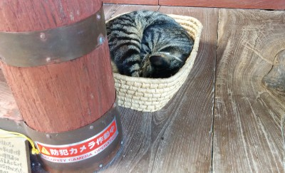 社殿の廊下側に猫ちゃん