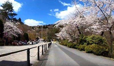 桜並木の参道の様子