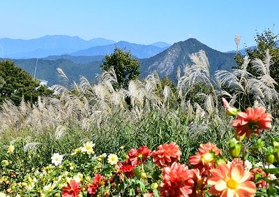 湯沢高原の花とススキと山々
