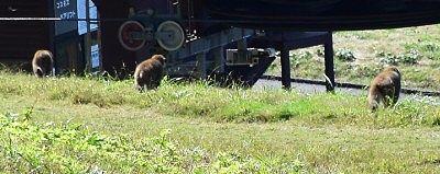 山頂駅周辺にいた猿発見