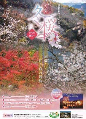2019冬桜チラシ