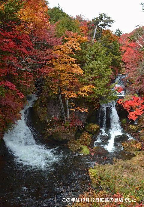 2017年竜頭の滝の紅葉