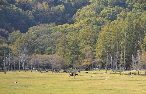 10月3日光徳牧場紅葉の様子