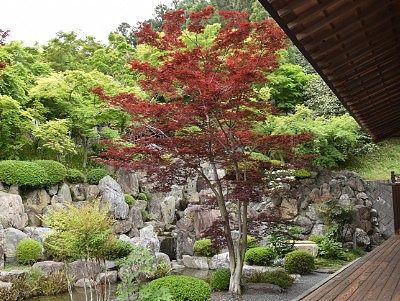 本堂脇の紅葉してるような葉っぱの木