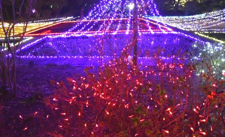 ぐんまフラワーパークイルミネーション2019日本庭園エリア