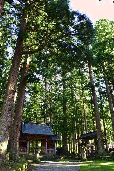 大きな杉の木に囲まれてる境内の様子
