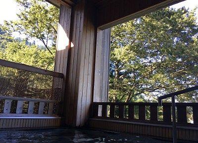 露天風呂から見える木々