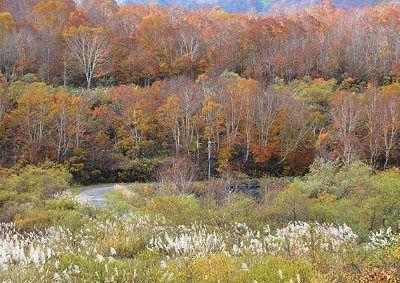 かも池周辺の紅葉
