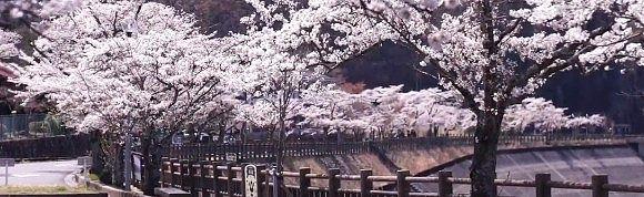 桜並木となる赤谷湖記念公園