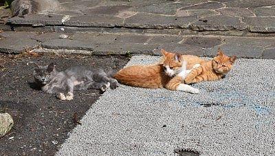 道の駅で見た猫