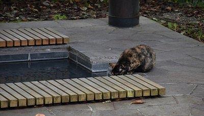 足湯にいた猫