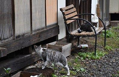 たくみの里の猫