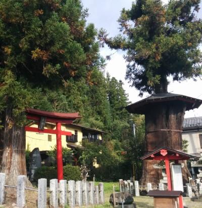 鳥頭神社と神代杉