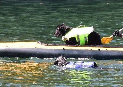 菅沼でカヌー遊びしてるゴールデンリトリバー