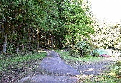 森の中に続いてる遊歩道
