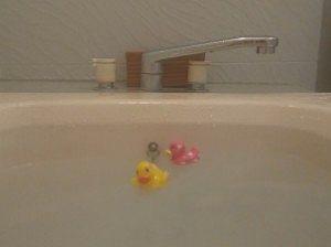 白濁風呂とアヒル