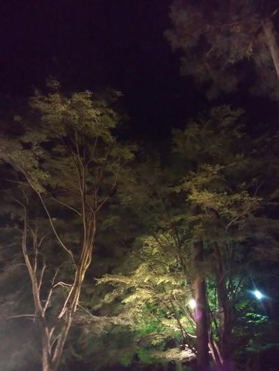 夜のライトアップ