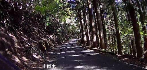 倒木のあった道路