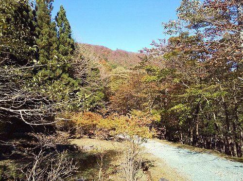 利平茶屋森林公園紅葉