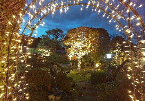 イルミネーションの庭