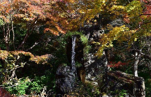 吉祥寺滝と紅葉