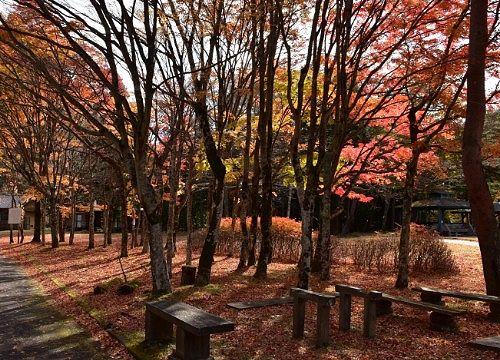 紅葉が綺麗な銀山平公園