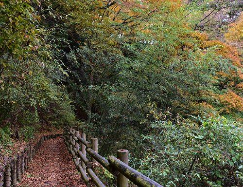 秋の遊歩道の様子