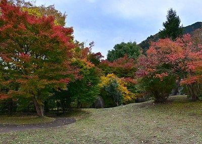 紅葉してる木々