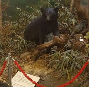 熊のはく製