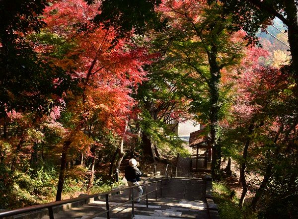 金龍寺石段と紅葉したモミジ