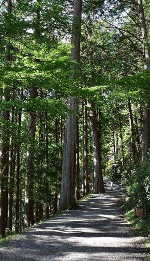 えんぶすびの木への参道